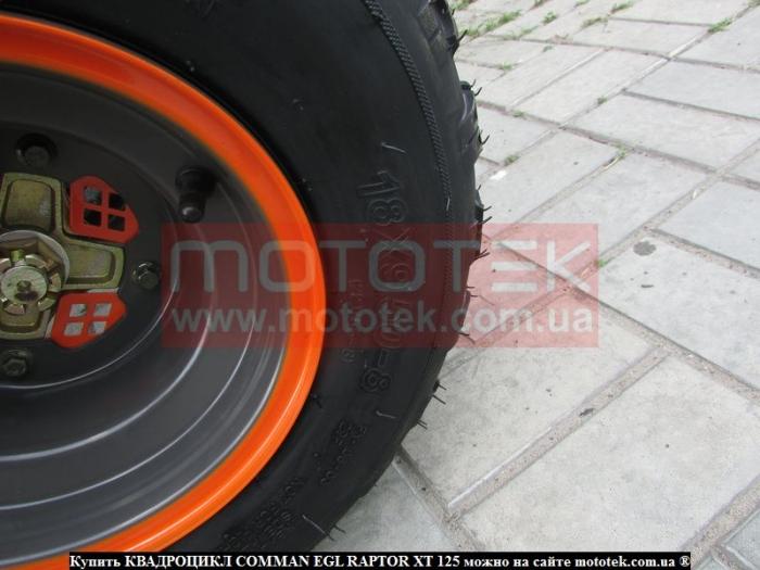 Raptor 125 XT цена